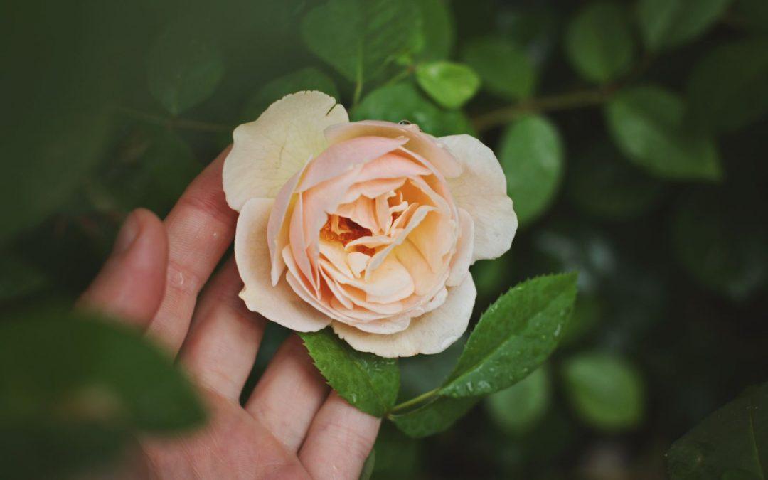 Cómo recuperar al amor de tu vida en 6 pasos